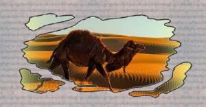 Верблюд,идущий по пустыне, окруженный песками.Геомантия-арабское гадание на песке.